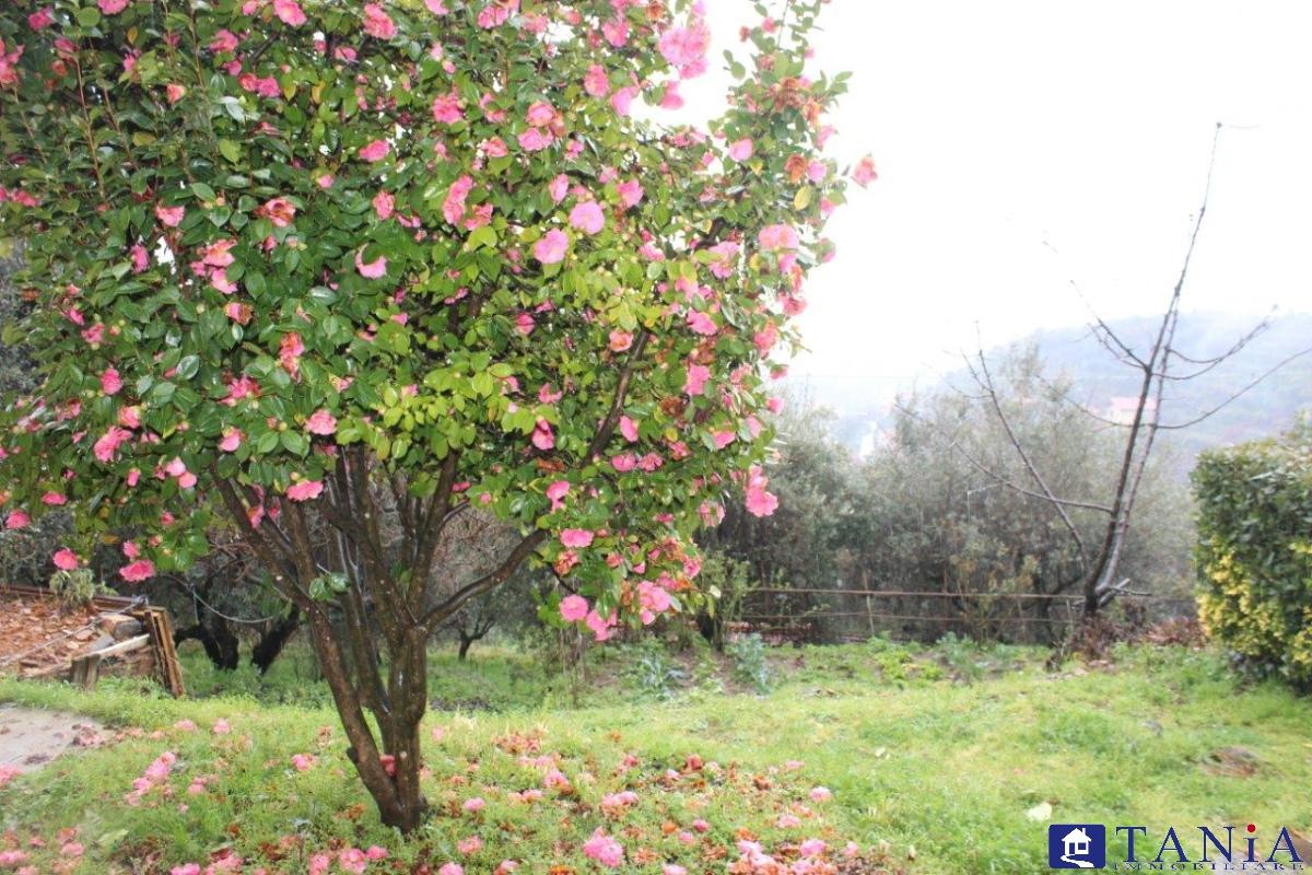 Casa Semindipendente Montignoso MS958216